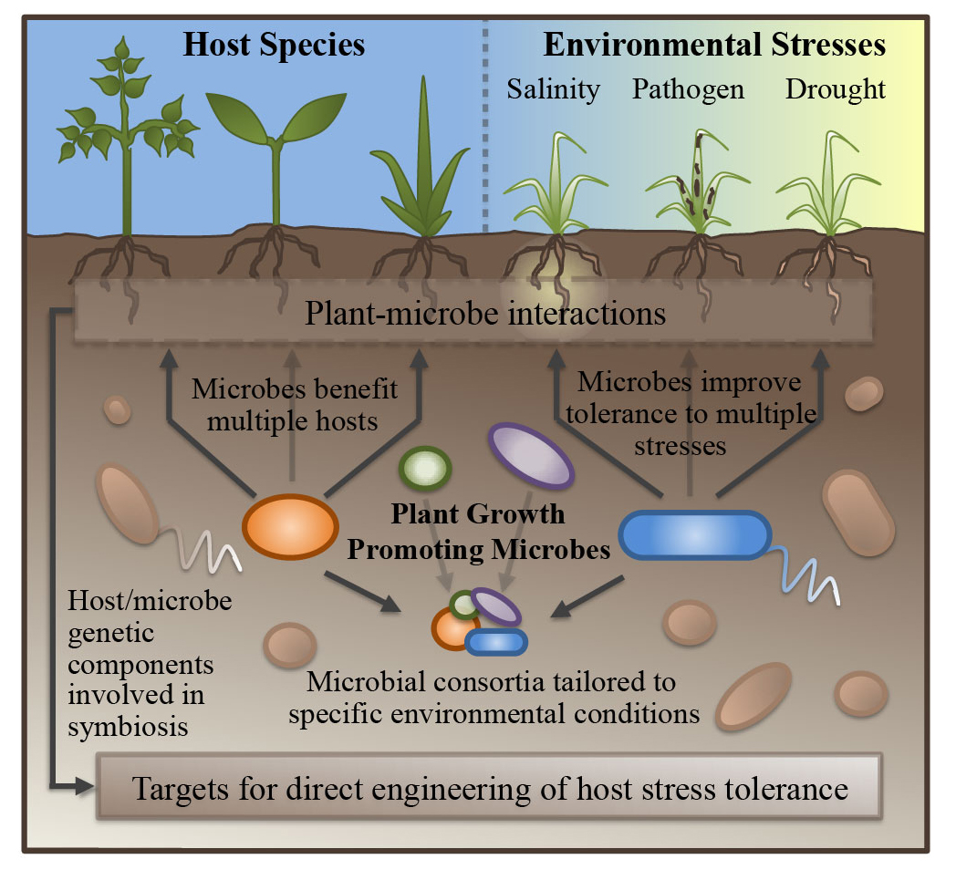 Mechanisms of plant growth promotion by microbial symbionts