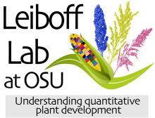 icon for leiboff lab